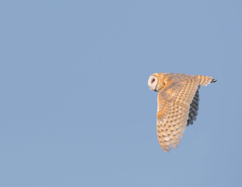 2018-calendar-iowa-owls12