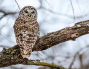 2018-calendar-iowa-owls16