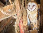 2018-calendar-iowa-owls20