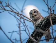 2018-calendar-iowa-owls22