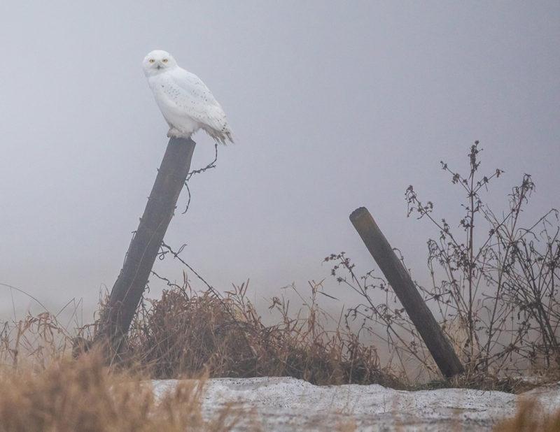 2018-calendar-iowa-owls24