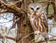 2018-calendar-iowa-owls4