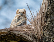 2018-calendar-iowa-owls8