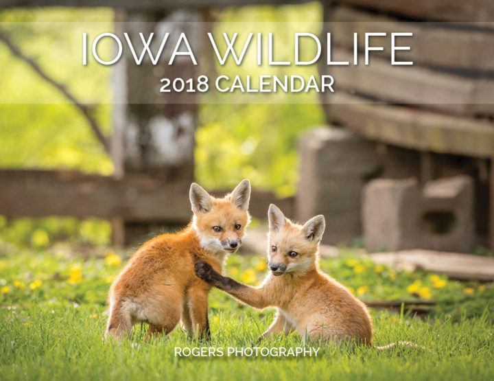 2018 Calendar: Iowa Wildlife