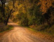 Golden Road In Loess Hills